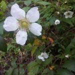 美しい花には棘がある!