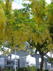 沖縄のおばぁたちは 南国の花のように明るくてたくましい!