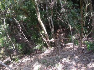 この雑木林のなかで、多くの人たちが命を絶たれた