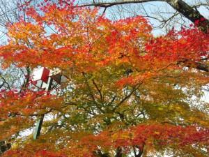 紅葉もまだきれいだった!